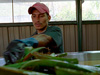 Ruben, one of the organic farmers growing aloe vera, tends to his plot