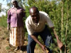 KOOFA farmers Jacinta and Sampson are harvesting their tea tree crop